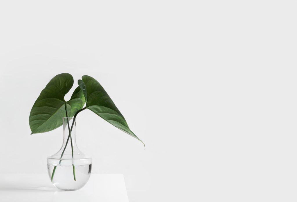 minimalist leaf in vase on white desk