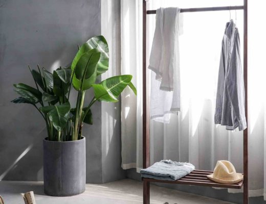 Clothing rack in room next to potted plant