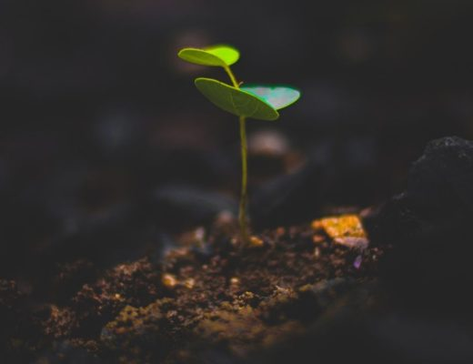 Green plant sprouting from dirt