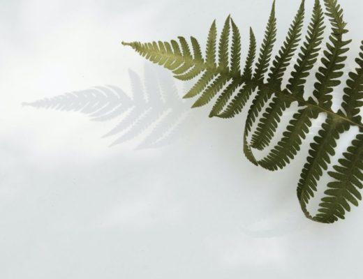 Green leaf against white background