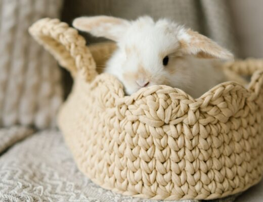 Rabbit inside basket