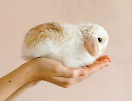 Person holding baby rabbit in their hands